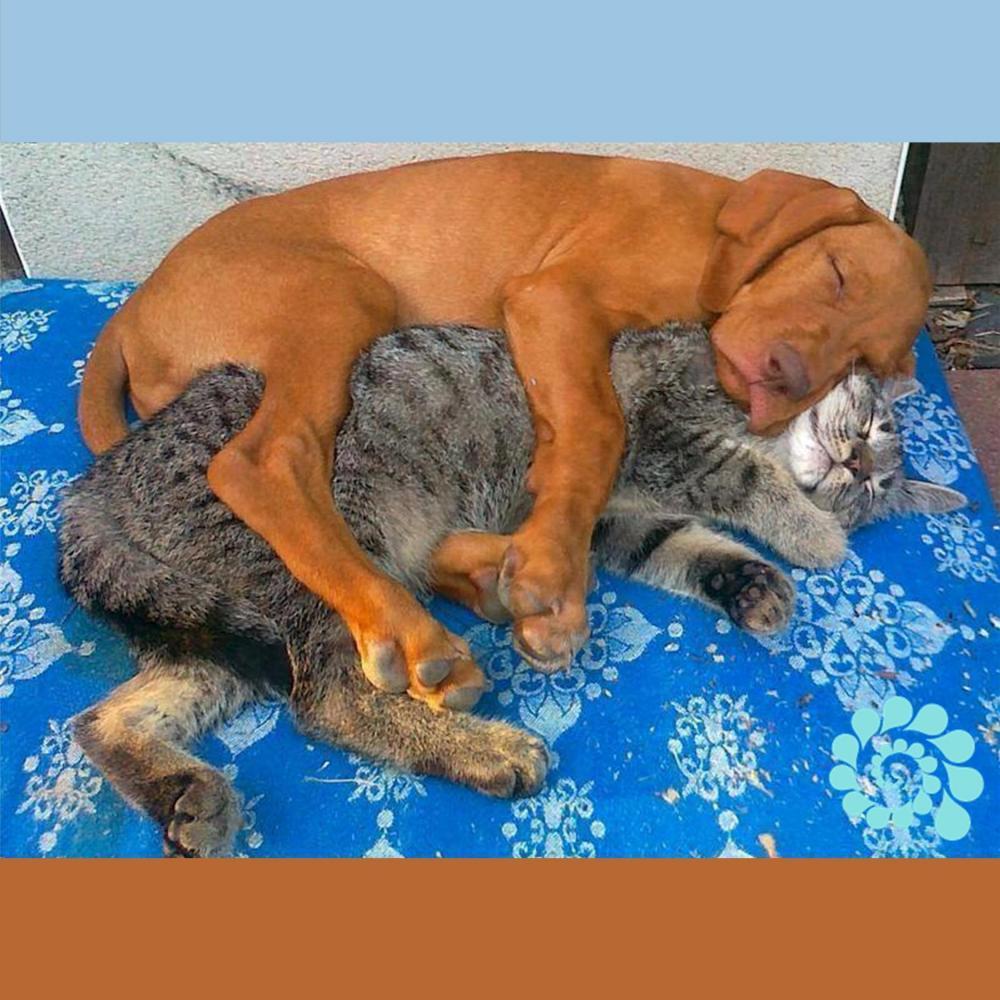 Cuddling services victoria